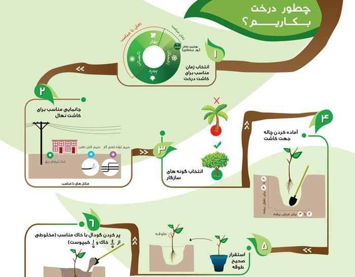 tree-infographics