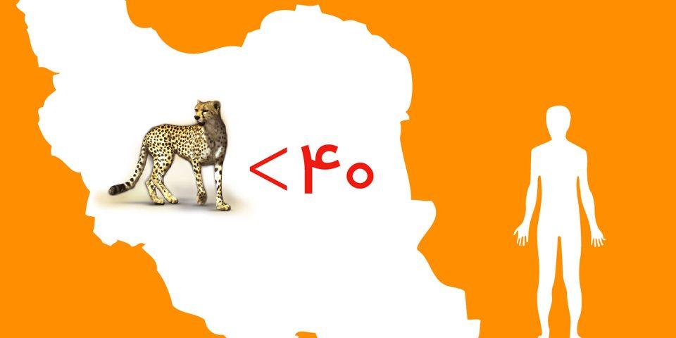 تعداد یوزپلنگ آسیایی ایران