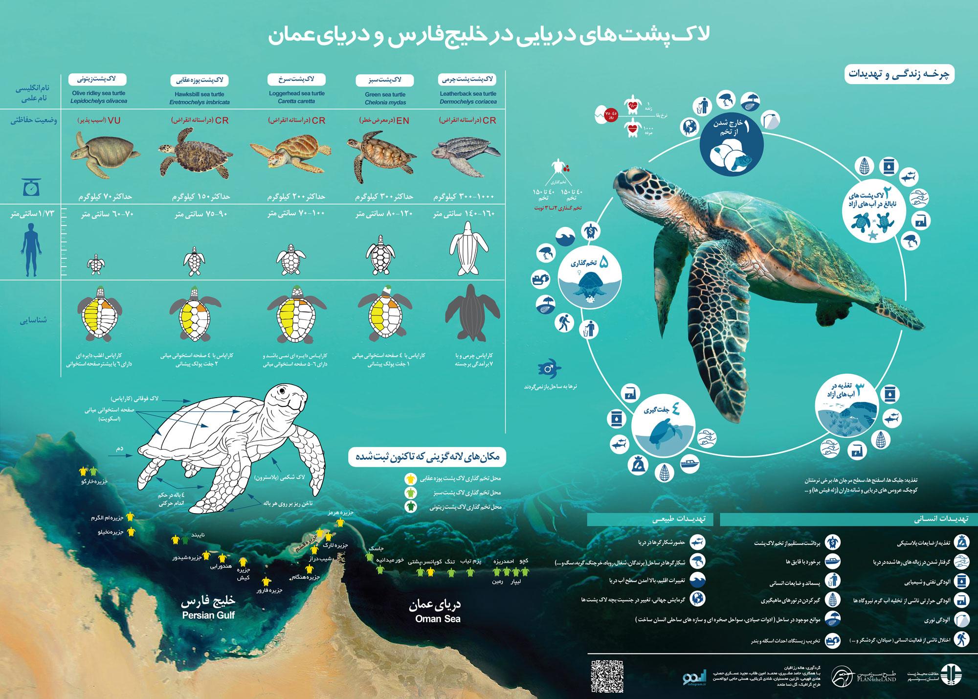 لاک پشت های خلیج فارس